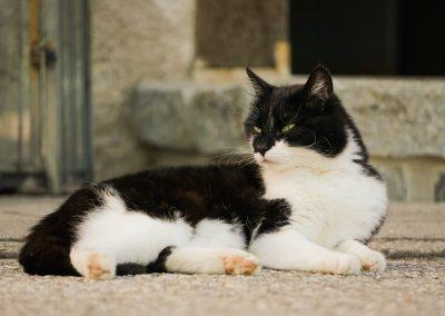 Unser Katze Felix