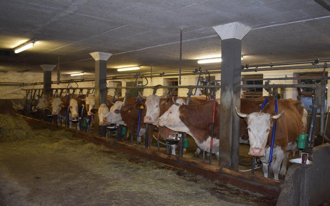 Milchviehbetrieb eingestellt