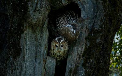 Tierfotos von Hobbyfotografen