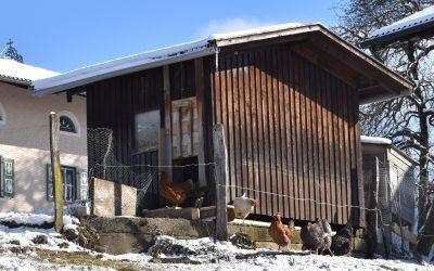 Ein neuer Stall für unsere Hühner